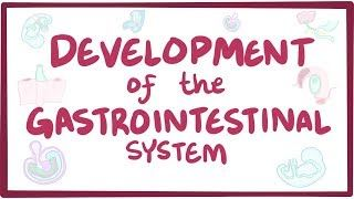 Video poster for Development of the gastrointestinal system