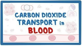 Video poster for Carbon dioxide transport in blood