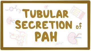 Video poster for Tubular secretion of PAH