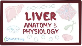 Video poster for Liver anatomy and physiology
