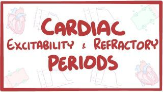 Video poster for Excitability and refractory periods