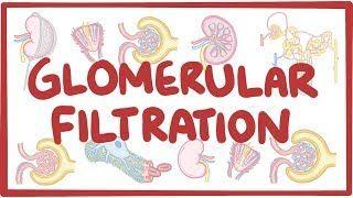 Video poster for Glomerular filtration