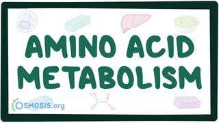 Video poster for Amino acid metabolism