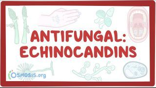Video poster for Antifungal: Echinocandins