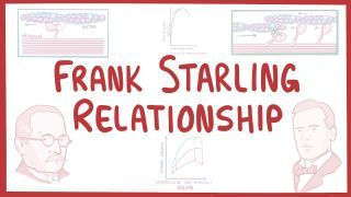 Video poster for Frank-Starling relationship