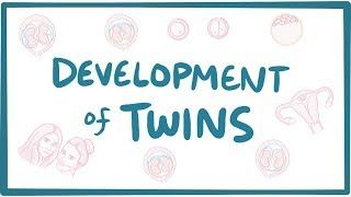 Video poster for Development of twins