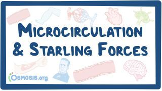 Video poster for Microcirculation and Starling forces
