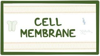 Video poster for Cell membrane