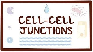 Video poster for Cell-cell junctions