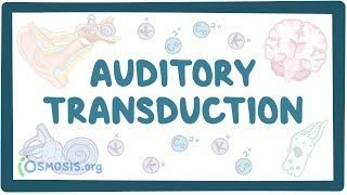 Video poster for Auditory transduction and pathways