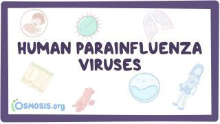 Video poster for Human parainfluenza viruses