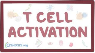 Video poster for T cell activation