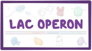 Video poster for Lac operon