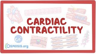 Video poster for Cardiac contractility