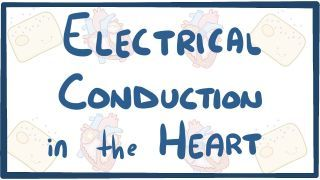 Video poster for Electrical conduction in the heart