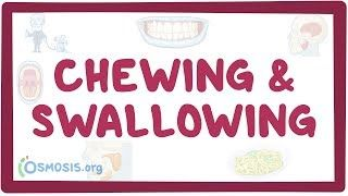 Video poster for Chewing and swallowing