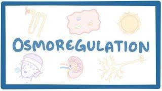 Video poster for Osmoregulation