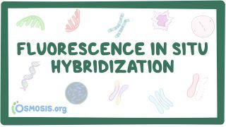 Video poster for Fluorescence in situ hybridization
