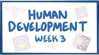 Video poster for Human development week 3
