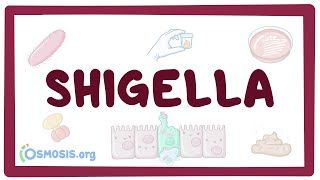 Video poster for Shigella