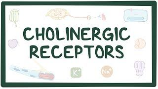 Video poster for Cholinergic receptors