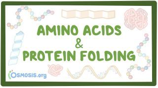 Video poster for Amino acids and protein folding