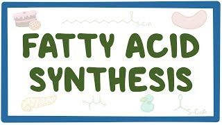 Video poster for Fatty acid synthesis