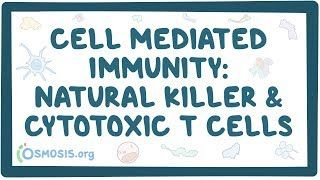 Video poster for Cell mediated immunity of Natural Killer and CD8 cells