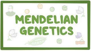 Video poster for Mendelian genetics and punnett squares