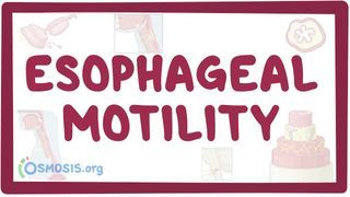Video poster for Esophageal motility