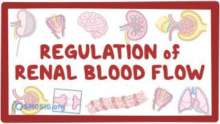 Video poster for Regulation of renal blood flow