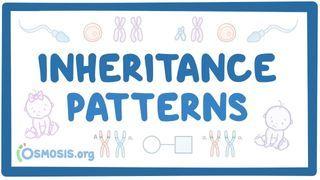 Video poster for Inheritance patterns
