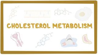 Video poster for Cholesterol metabolism