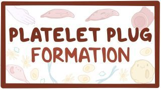 Video poster for Platelet plug formation (primary hemostasis)