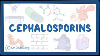 Video poster for Cell wall synthesis inhibitors: Cephalosporins