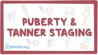 Video poster for Puberty and Tanner staging