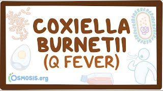 Video poster for Coxiella burnetii (Q fever)