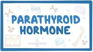 Video poster for Parathyroid hormone