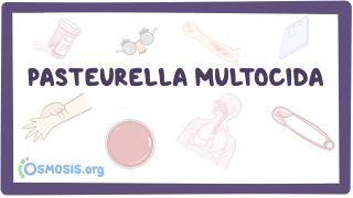 Video poster for Pasteurella multocida