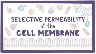 Video poster for Selective permeability of the cell membrane