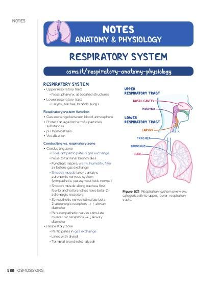 NOTES NOTES  ANATOMY & PHYSIOLOGY  RESPIRATORY SYSTEM osms.it/respiratory-anatomy-physiology RESPIRATORY SYSTEM  ▪ Upper respiratory tract ▫ Nose, pharynx, associated structures ▪ Lower respiratory tract ▫ Larynx, trachea, bronchi, lungs  Respiratory system function ▪ Gas exchange between blood, atmosphere ▪ Protection against harmful particles, substances ▪ pH homeostasis ▪ Vocalization Conducting vs. respiratory zone ▪ Conducting zone ▫ Does not participate in gas exchange ▫ Nose to terminal bronchioles ▫ Function: inspire, warm, humidify, filter air before gas exchange ▫ Smooth muscle layer contains autonomic nervous system (sympathetic, parasympathetic nerves) ▫ Smooth muscle along trachea, first few bronchial branches have beta-2adrenergic receptors ▫ Sympathetic nerves stimulate beta2-adrenergic receptors → ↑ airway diameter ▫ Parasympathetic nerves stimulate muscarinic receptors → ↓ airway diameter ▪ Respiratory zone ▫ Participates in gas exchange ▫ Lined with alveoli ▫ Terminal bronchioles–alveoli  588 OSMOSIS.ORG  Figure 67.1 Respiratory system overview, categorized into upper, lower respiratory tracts.