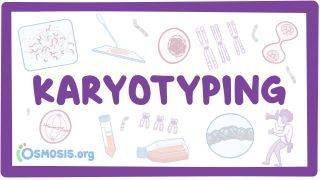 Video poster for Karyotyping