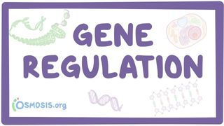 Video poster for Gene regulation
