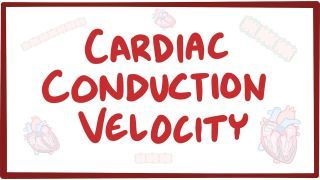 Video poster for Cardiac conduction velocity