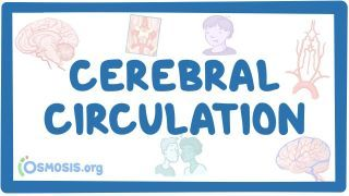 Video poster for Cerebral circulation