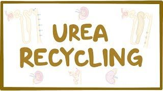 Video poster for Urea recycling