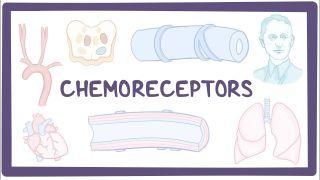 Video poster for Chemoreceptors