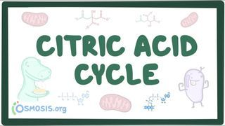 Video poster for Citric acid cycle
