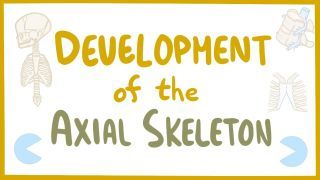 Video poster for Development of the axial skeleton